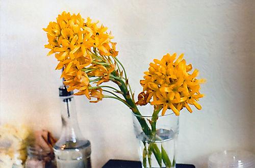 Filmcoffeshopflowers