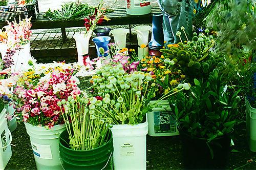 Flowersunderatent