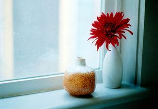 Flowercloseup01