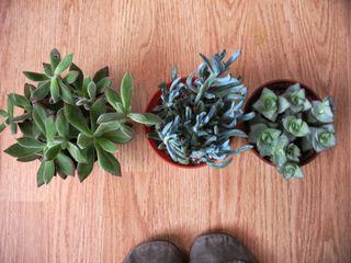 Newplants