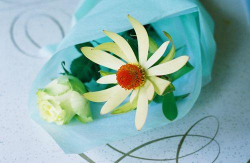 Beautyflower