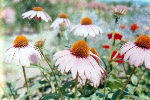 Flowerfarm7