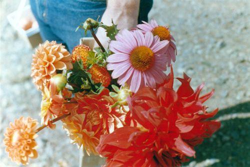 Flowerfarm9