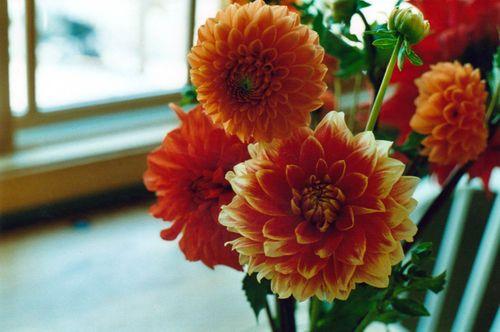 Flowerfarm10
