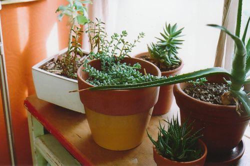 Kara2plants