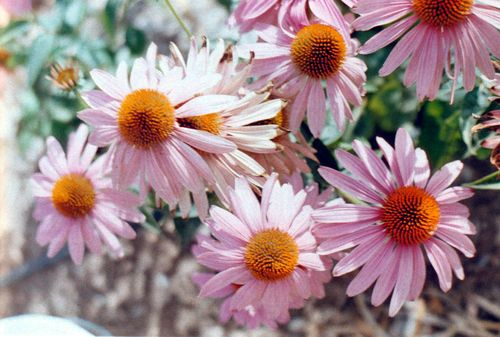 Flowerfarm1fromabove