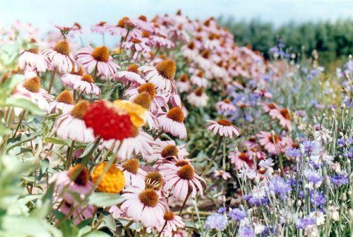 Flowerfarm8