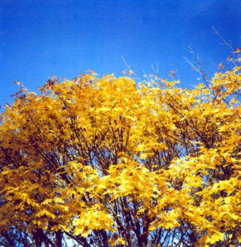 Polatree