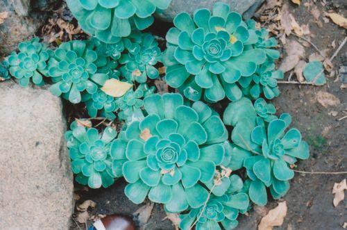 1succulents