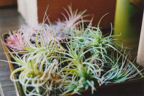 Tryaofplants