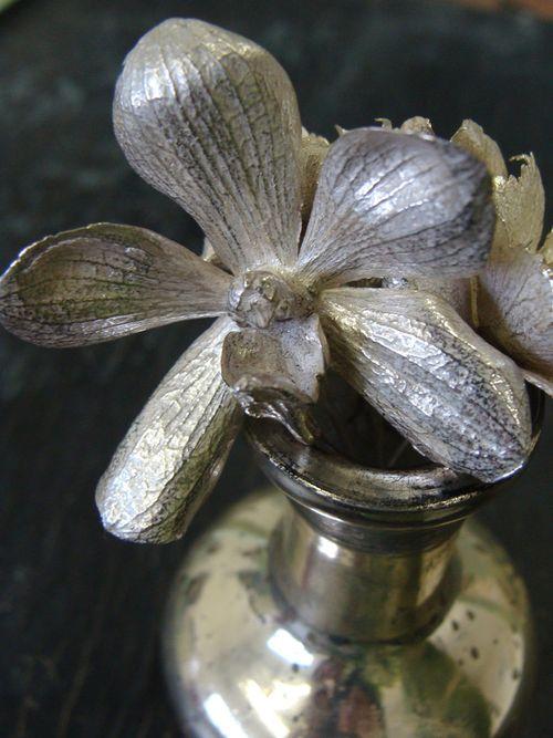 Maniorchid