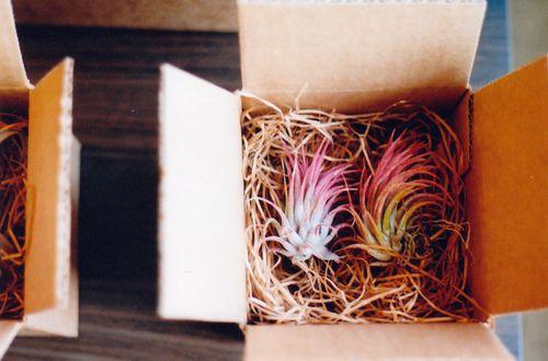 Pinkplantsinboxes