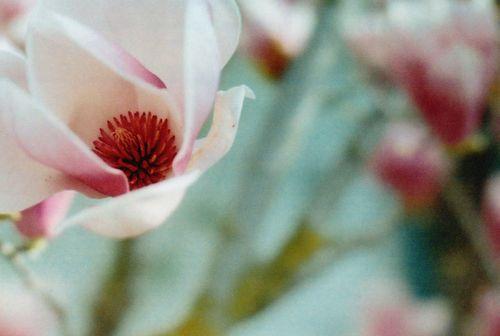 Tuliptree45