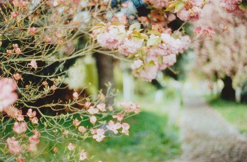 Floweringtree5