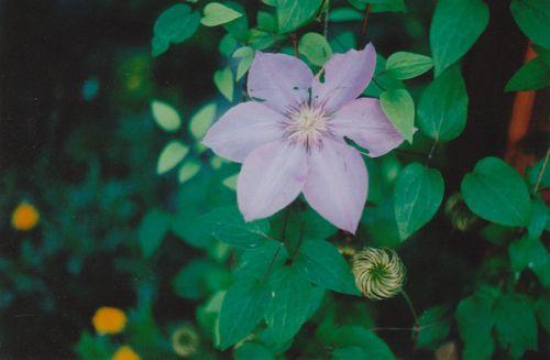0703purpleflower