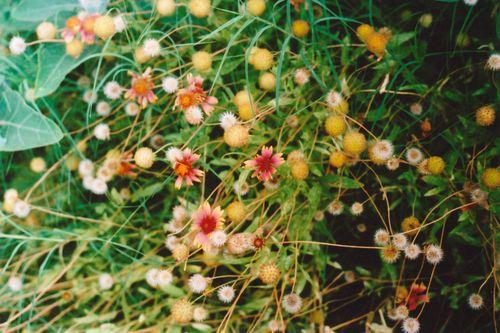 June94flowers