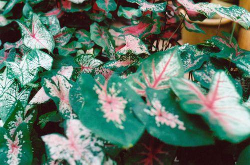 11kitchenplant