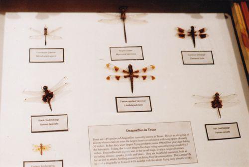 M2dragonfly