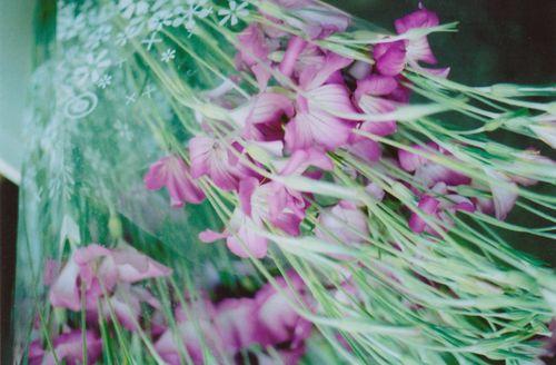 Flowers4