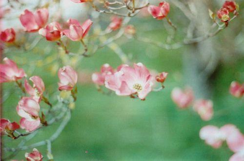 Floweringtree3