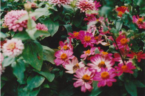 June1501flowers