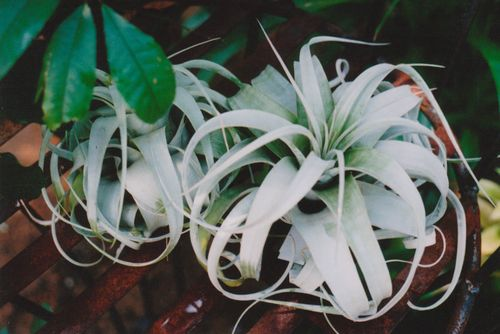 2airplant