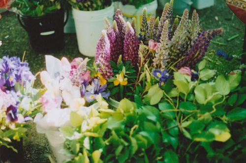 Flowers5