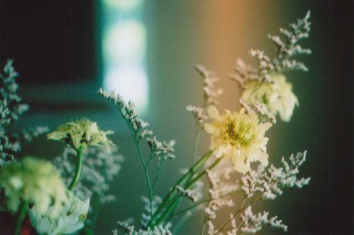Mon4flower