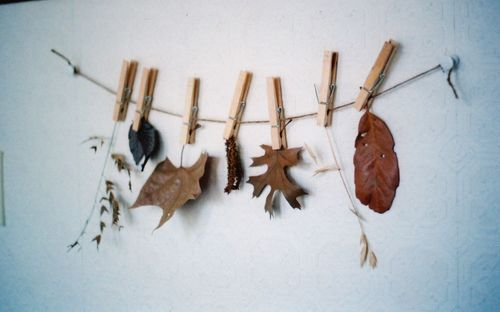 String_of_leaves