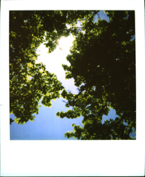 Sunintrees
