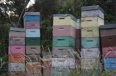 Beebox2
