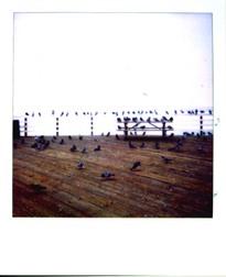 Birdsonpier
