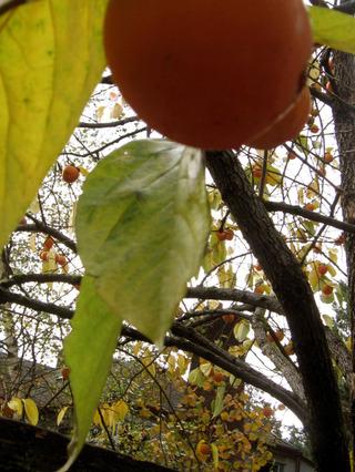 Persimtree